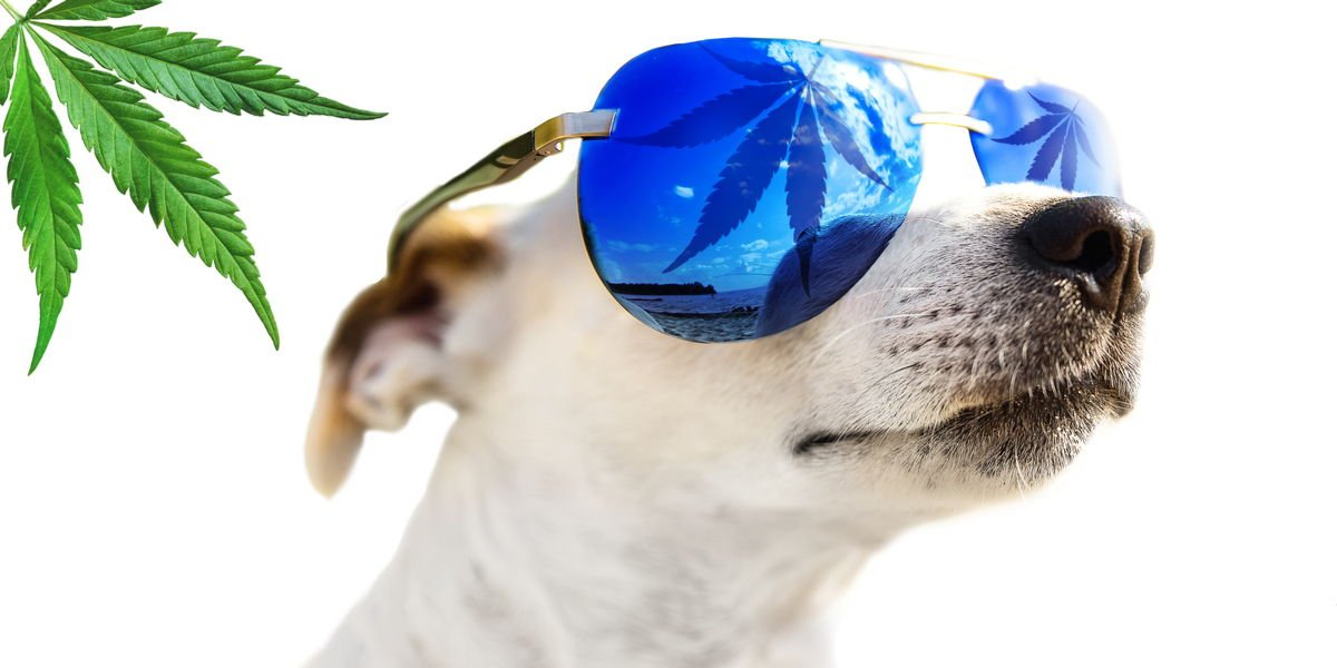 CBD Oil for Pets Guide