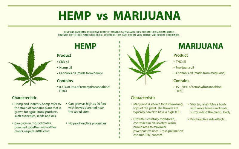 Which CBD oil gets you high