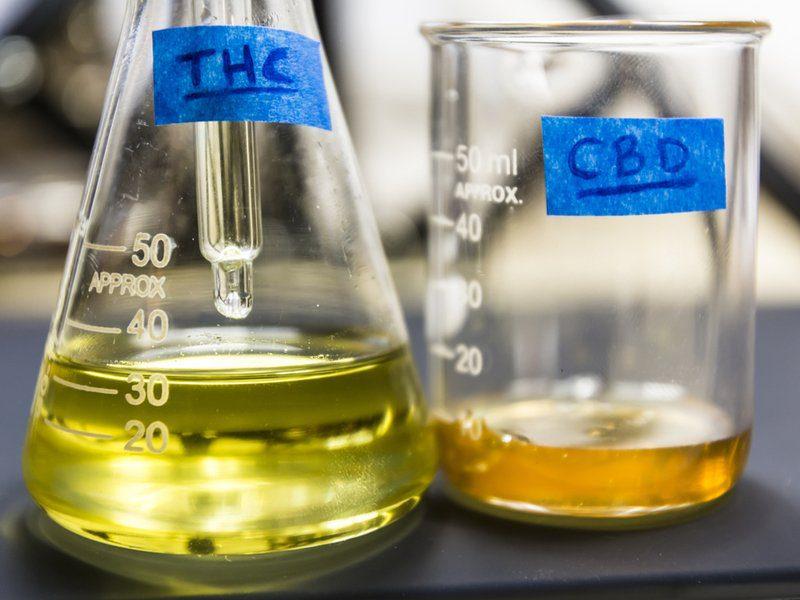 Tetrahydrocannabinol (THC) vs Cannabidiol (CBD)