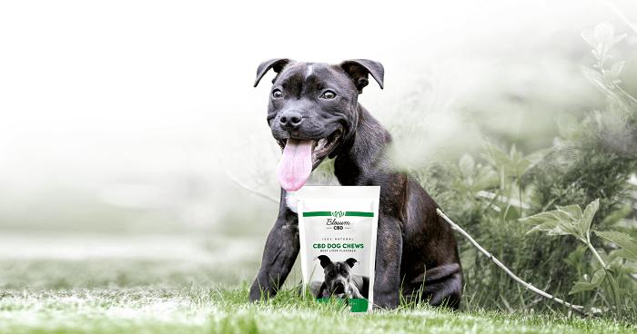 CBD Dog chews - 2