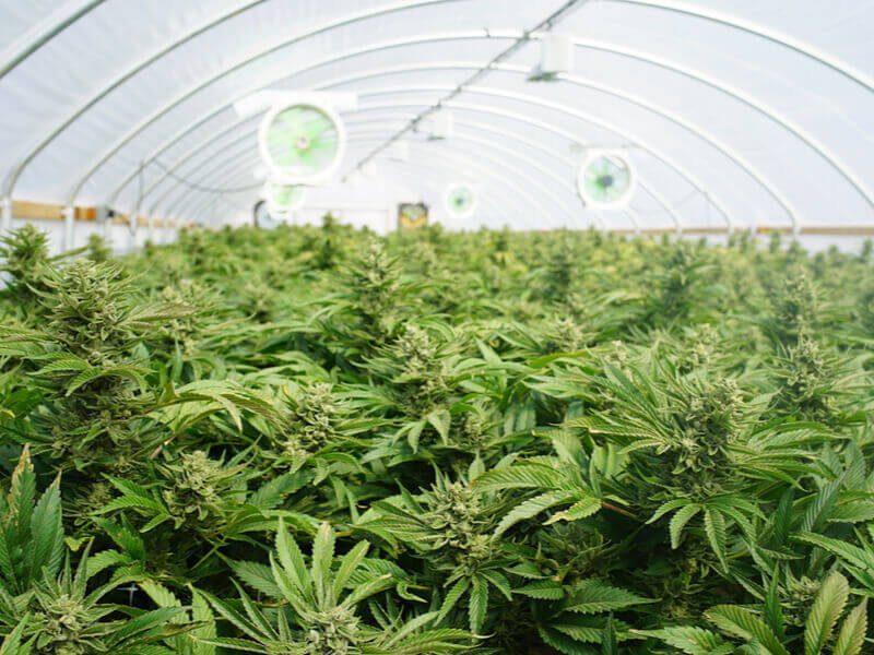 NC Marijuana Laws