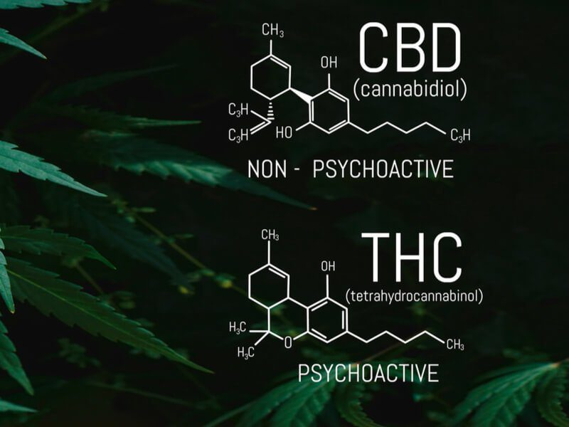 Is CBD the Same as THC?
