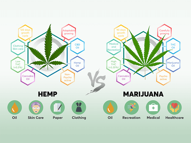 Hemp vs Marijuana: Why do People Confuse the Two?