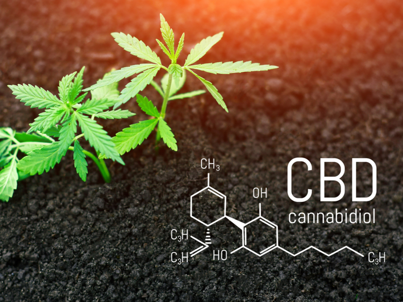 CBD Oil and Homeostasis