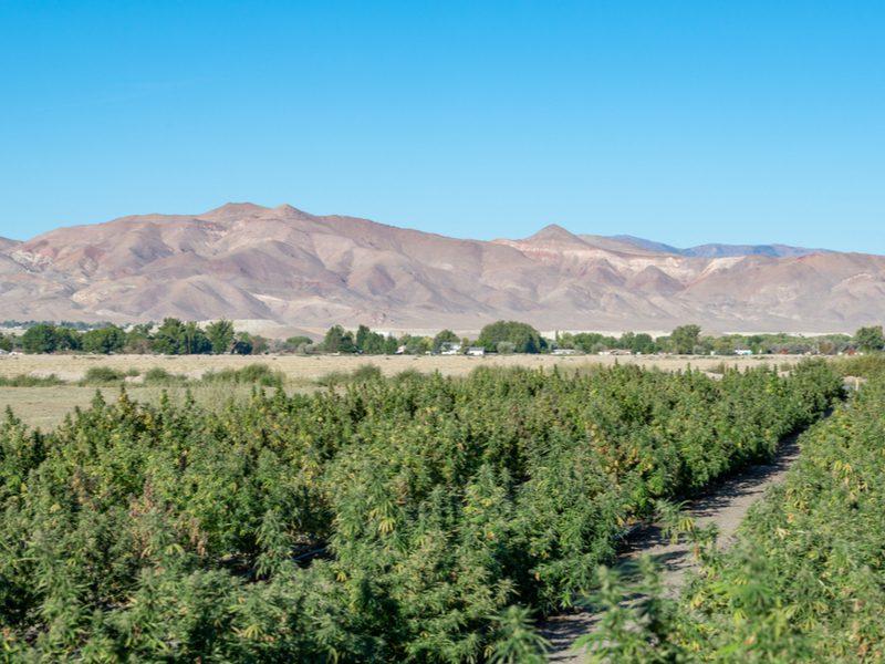 Nevada CBD Laws