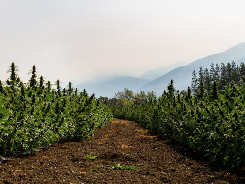 Can You Purchase CBD in Oregon?